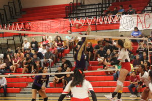 Lady 'Hounds fall to Lady Cardinals over weekend